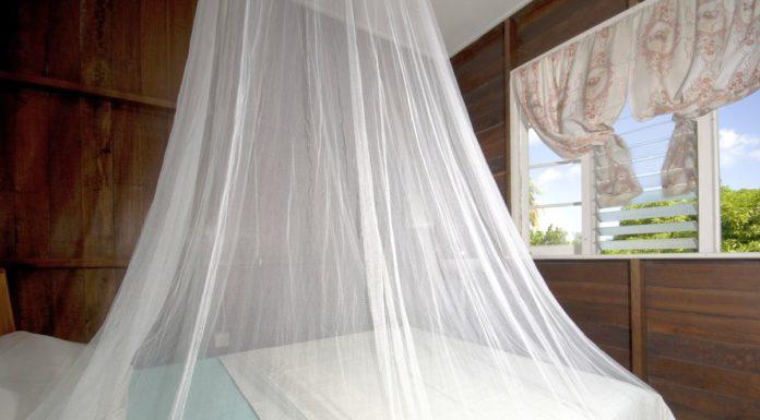 qu est ce que le moustique cousin ou tipule moustiques tigres. Black Bedroom Furniture Sets. Home Design Ideas